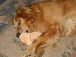 Casey with her favorite toy, a chirping chick