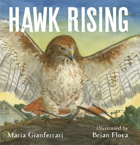 HAWK RISINGcover